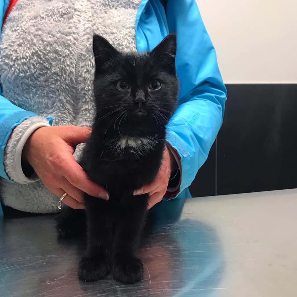 Lindo gatinho preto