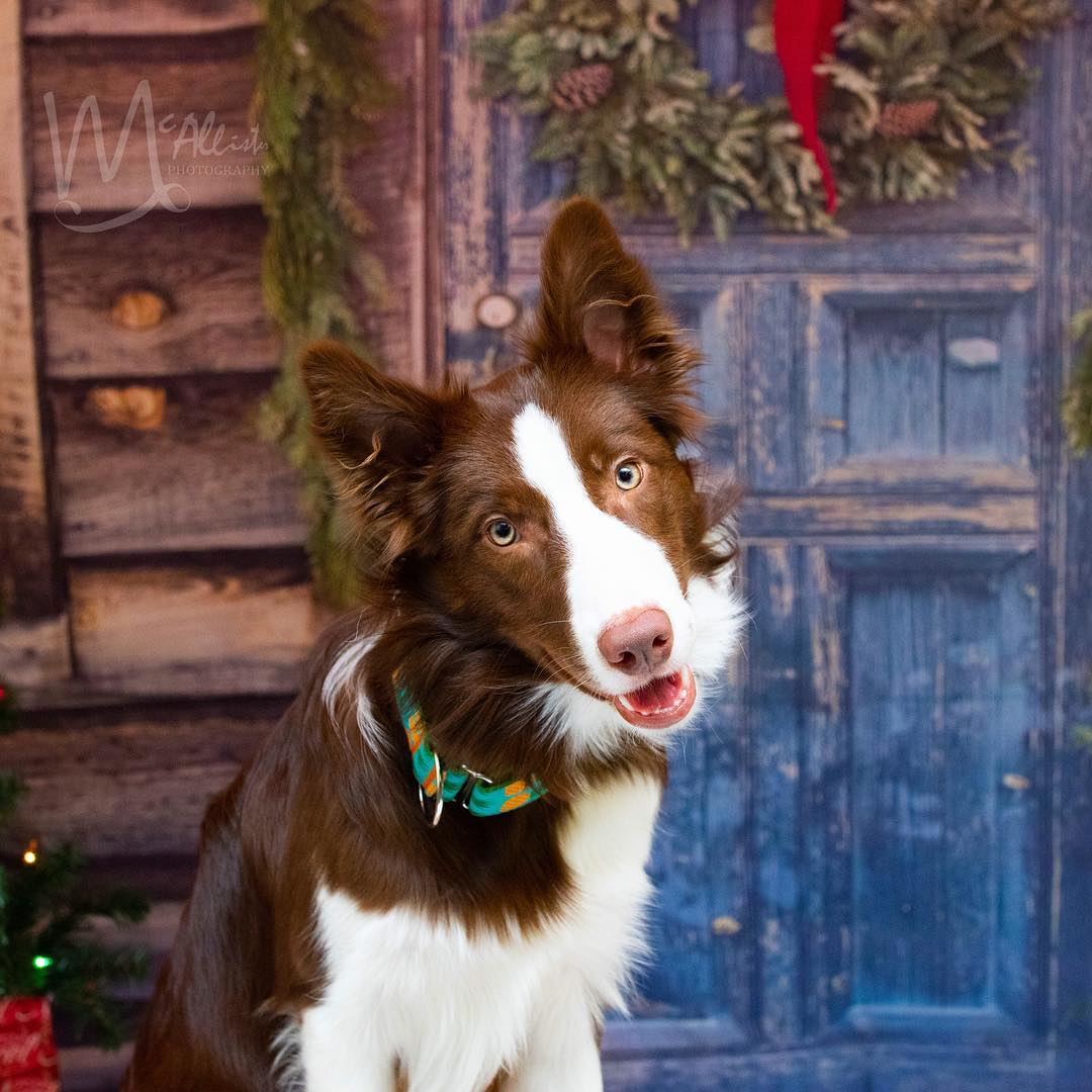 Hermoso perro posa para foto