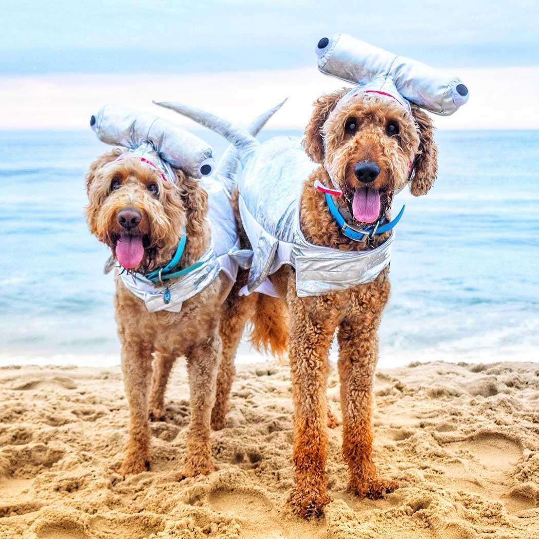 Hermosos perros en la playa