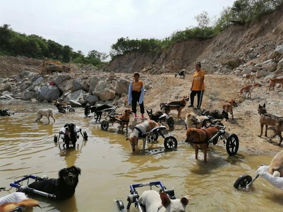 Hidroterapia perros