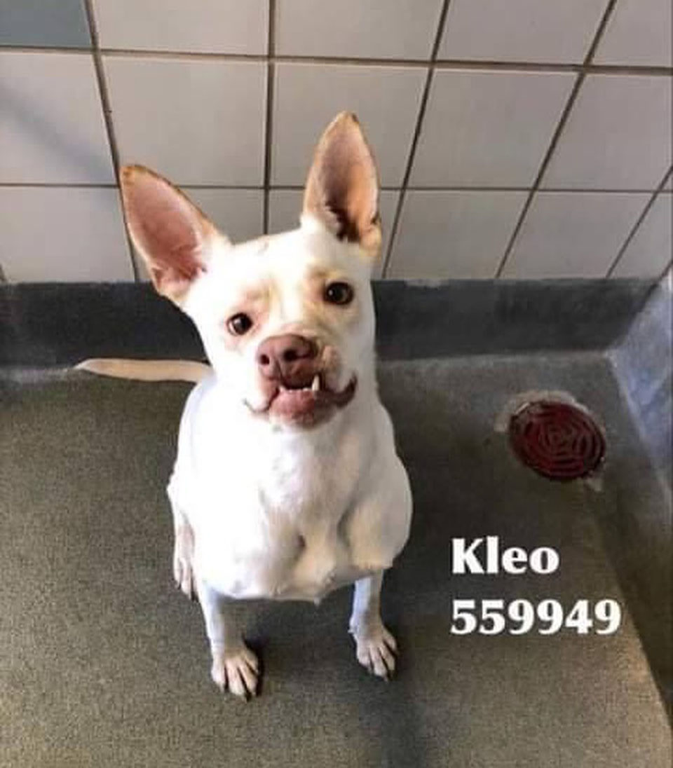 Kleo disponible