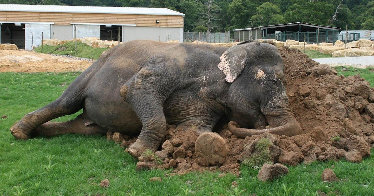 La elefanta más solitaria de Gran Bretaña
