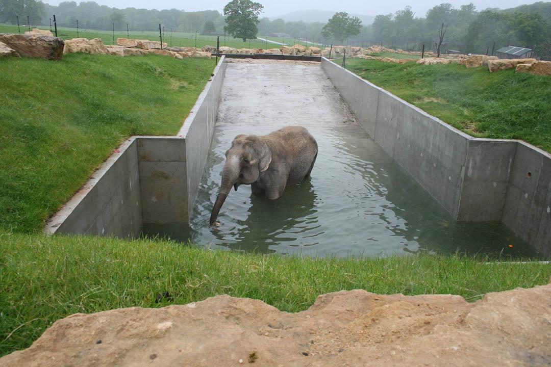 La elefanta más solitaria