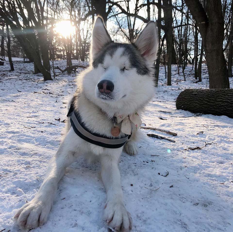 Perrita ciega nieve