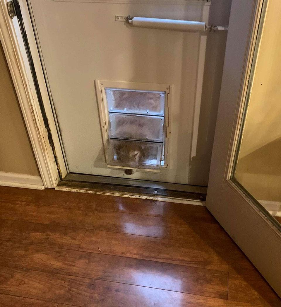 Perrita finge salir puerta