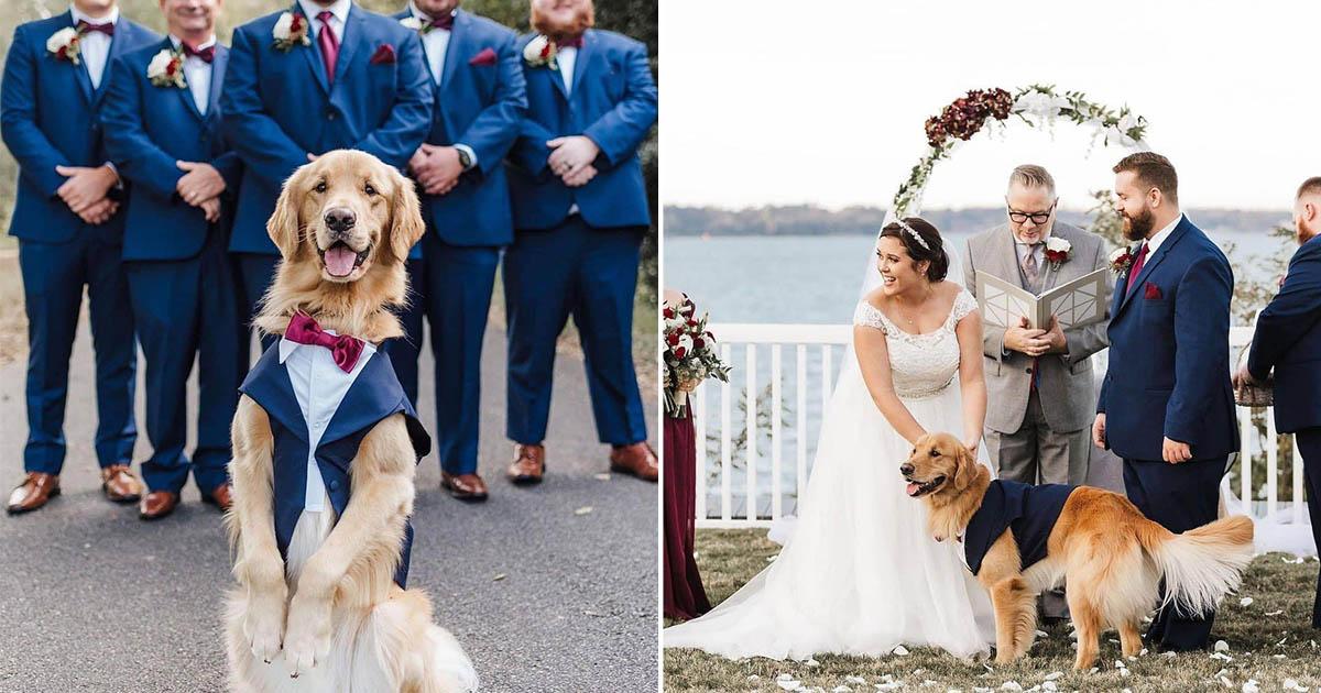 Perro de esta pareja llevó anillos