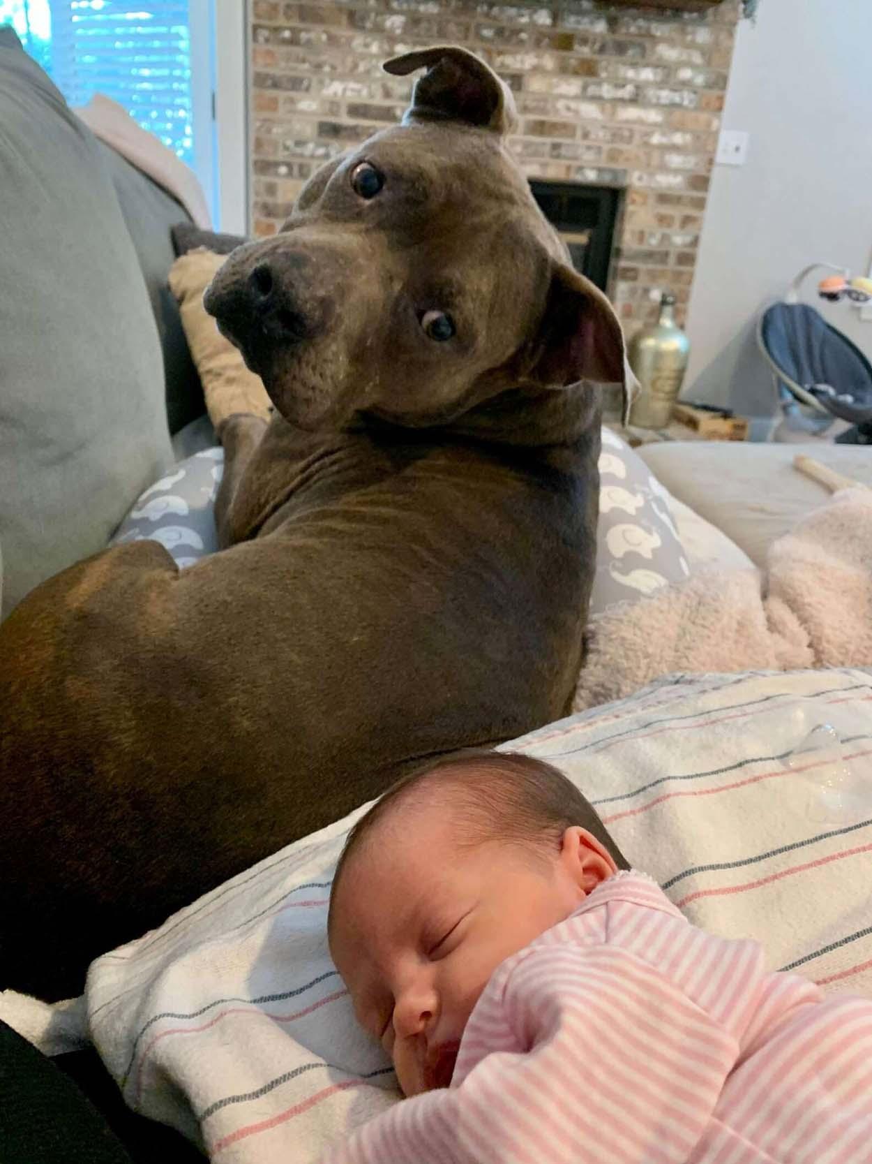 Perro reacciona al escuchar el llanto del bebé