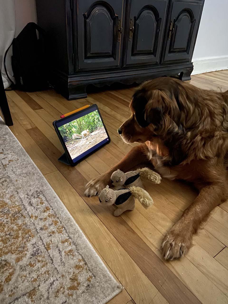 Perro se sorprende cuado ve ardillas dentro de su televisor