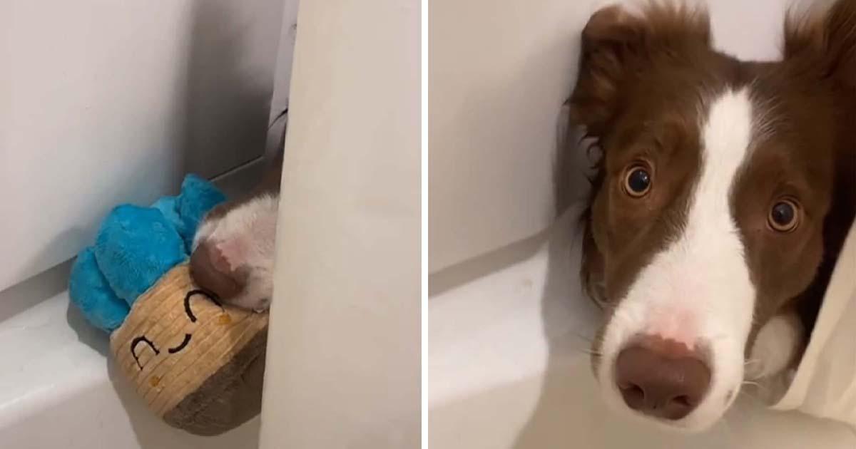 Perro sigue intentando jugar a buscar la pelota mientras mamá está en la ducha
