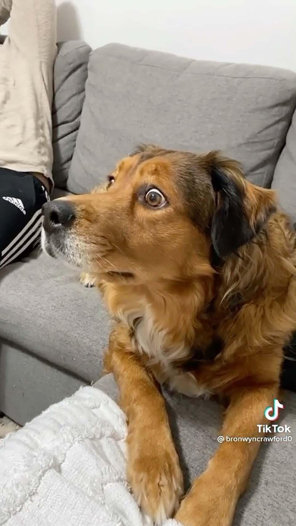 Perro ve ardillas dentro de su televisor