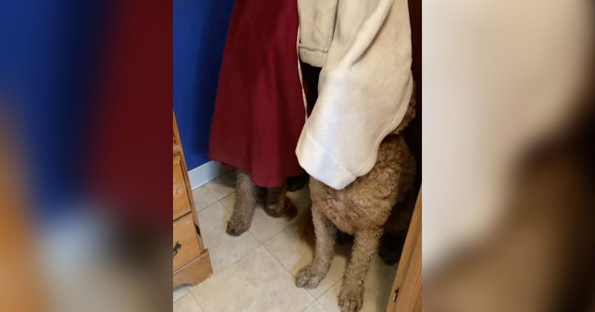 Perros escuchan a mamá preparando el baño e inmediatamente se vuelven invisibles