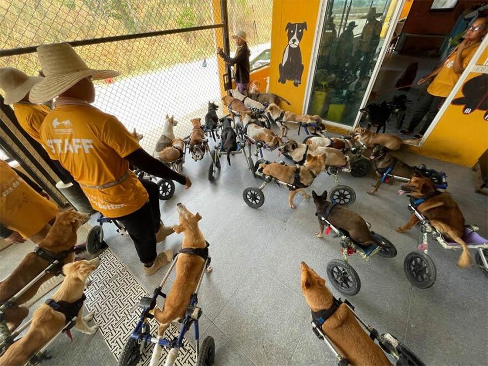 Refugio de animales tailandés cuida