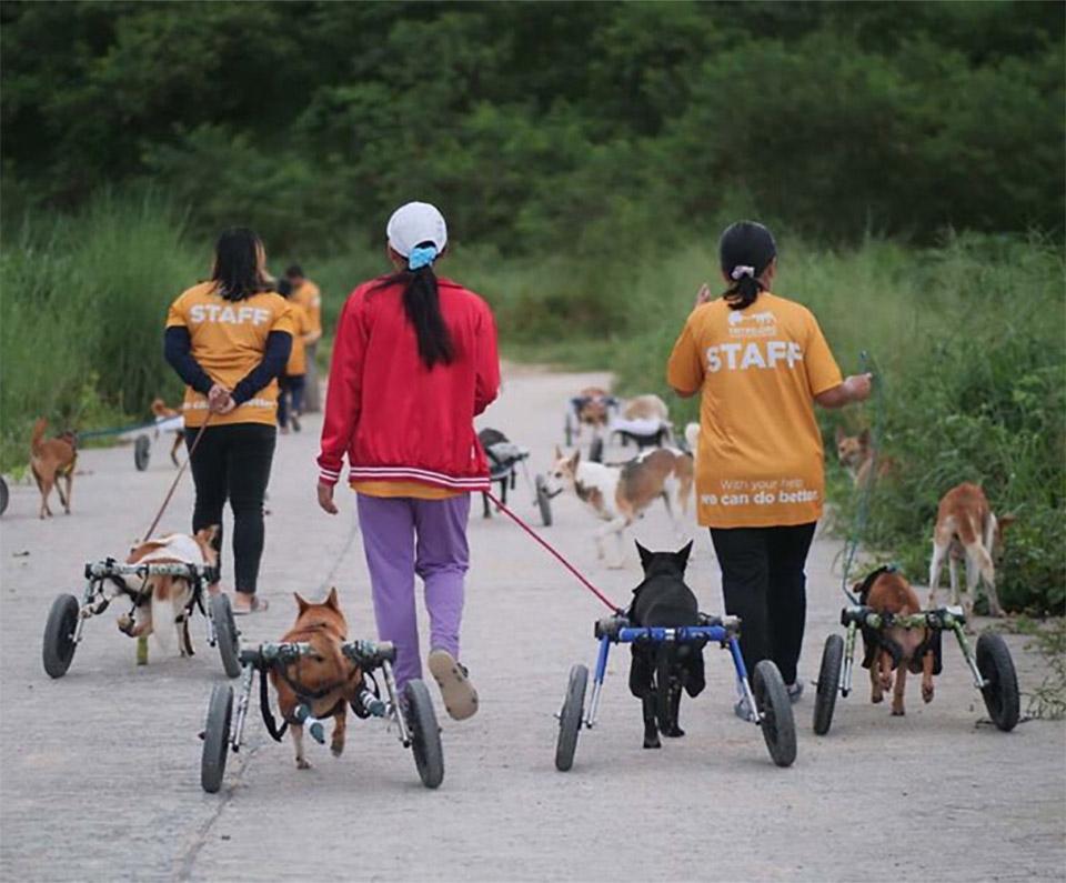 Refugio de animales tailandés paseo