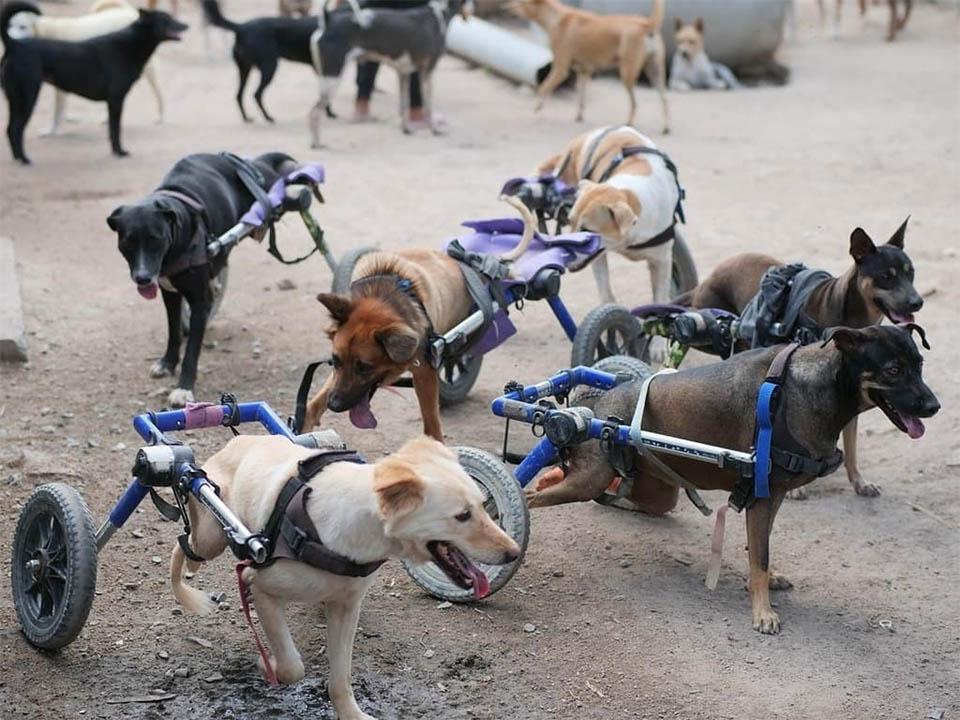 Refugio de animales tailandés perros
