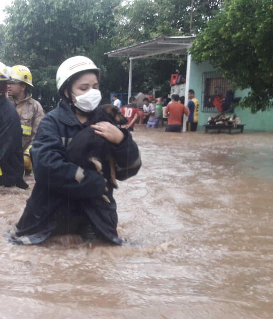 Rescatan mascotas