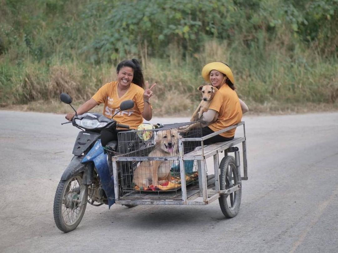 Rescatando perros