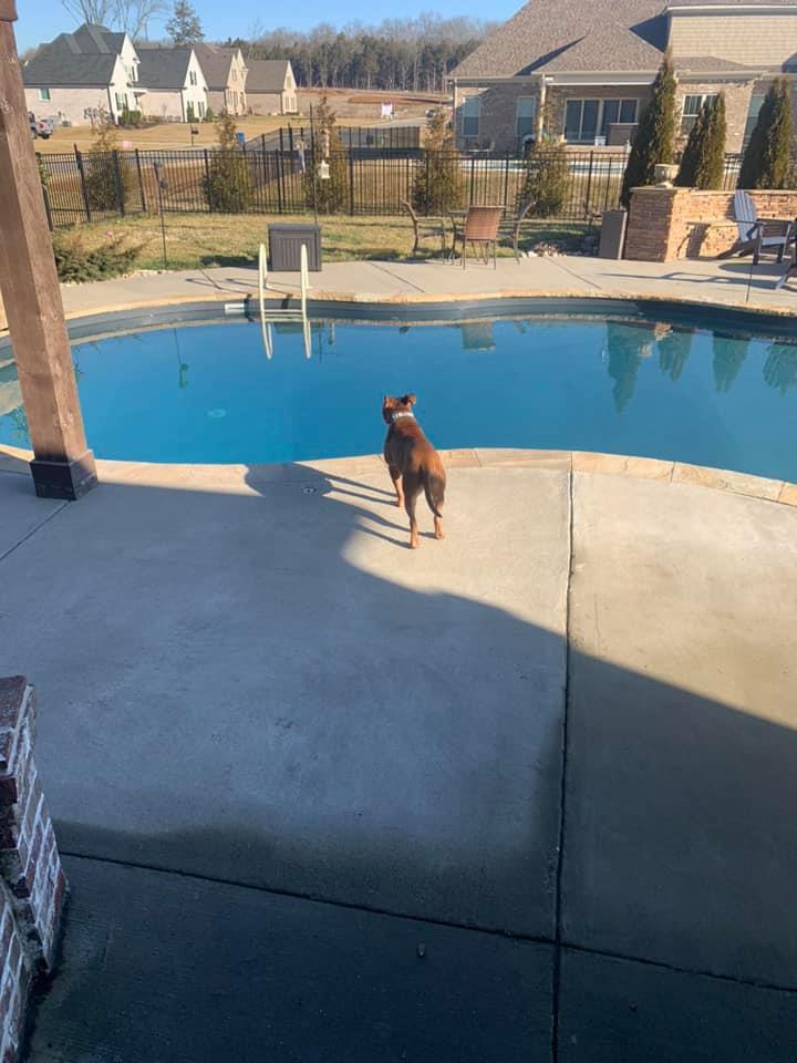 Sid en la piscina