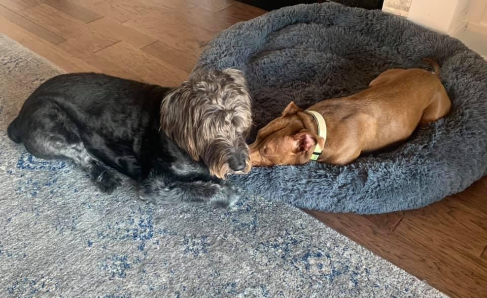 Sid y su hermano