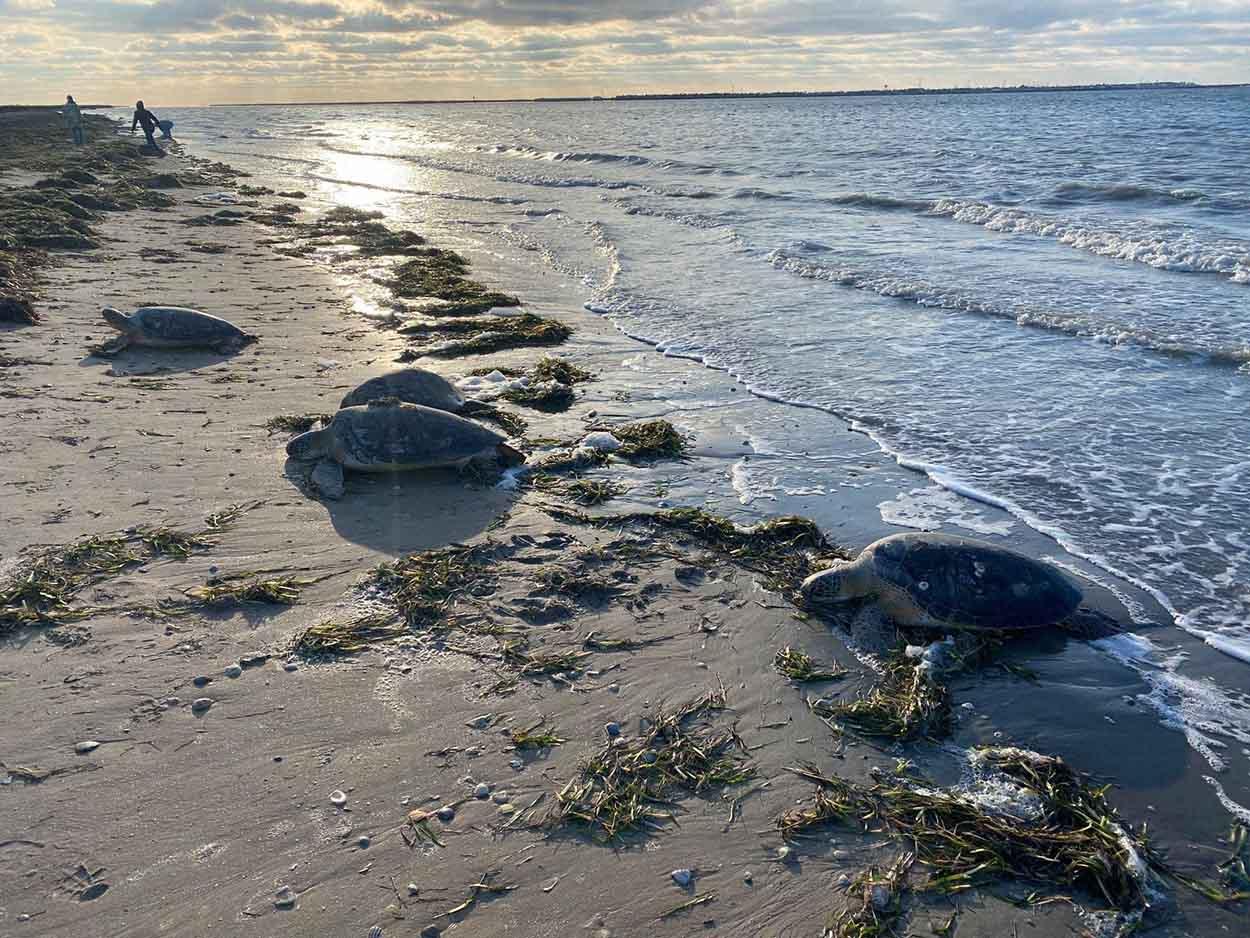Tortugas salen del mar