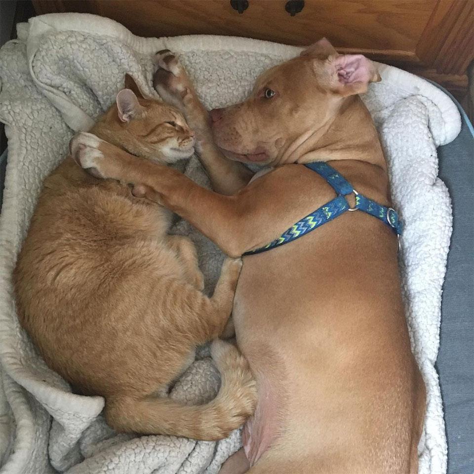 Dexter y Oscar