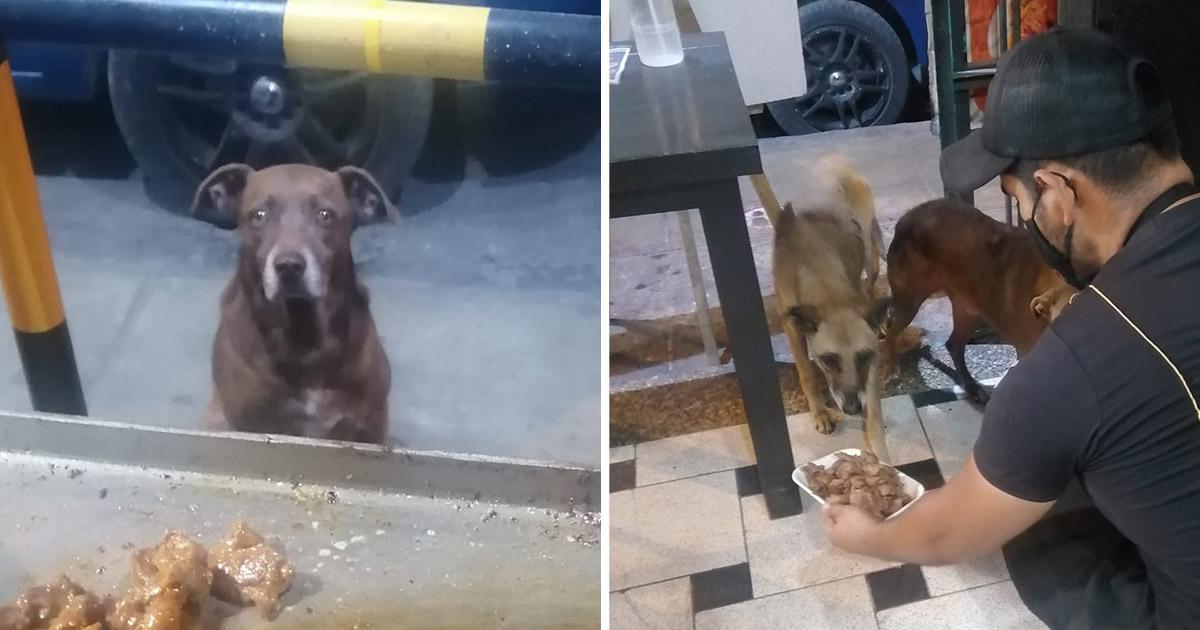 Dueño de restaurante ofrece comida gratis perros sin hogar