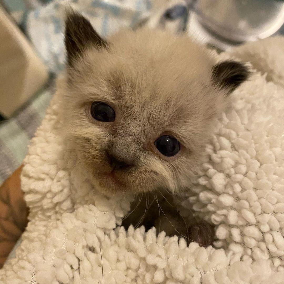 Gato pequeño de refugio