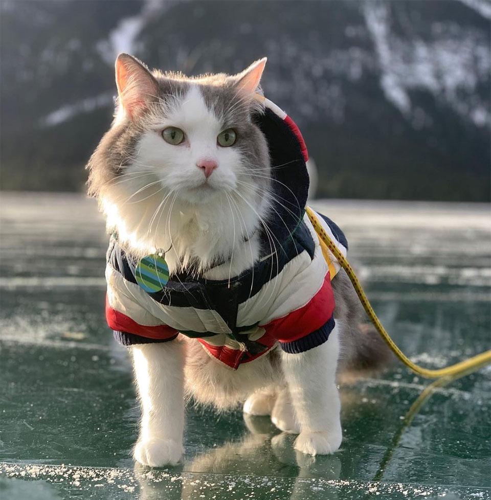 Gary en rio congelado