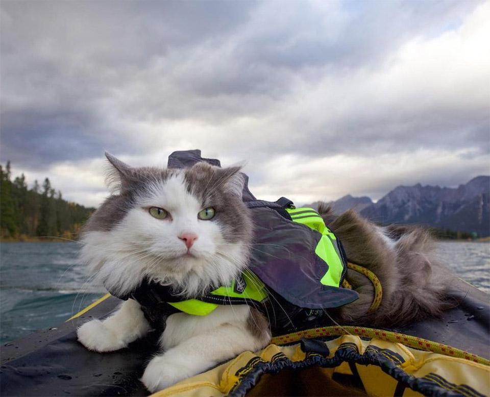 Gary navegando