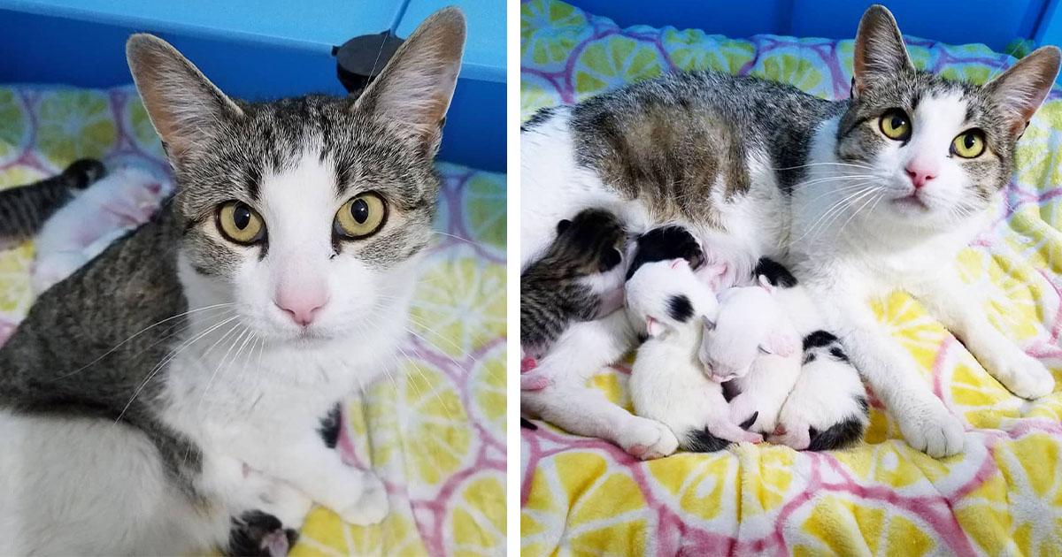 Gata llega a la casa adecuada y pide que la dejen entrar para tener a sus gatitos