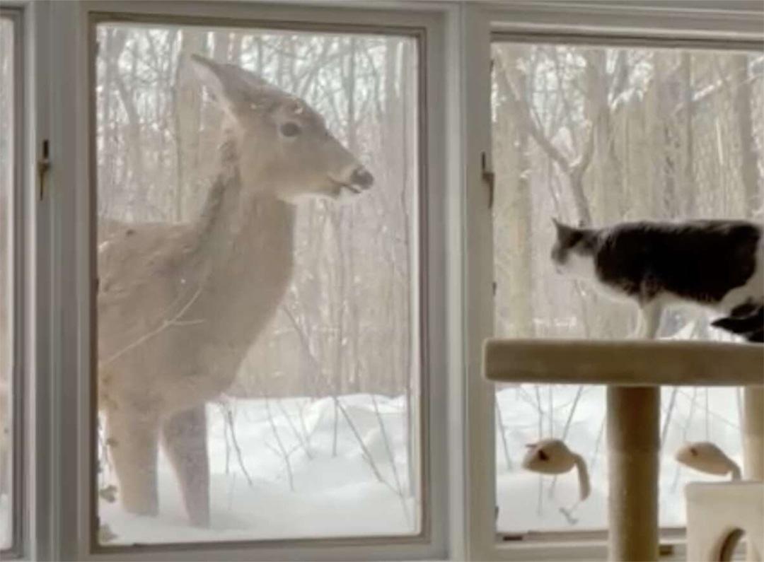 Gatita forma amistad con ciervo