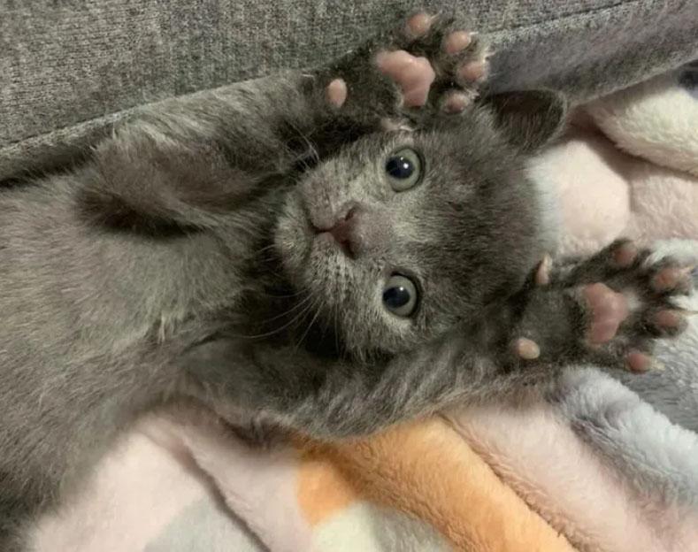 Gatito abandonado en maceta