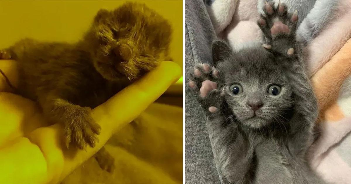 Gatito abandonado en una maceta, prospera gracias a estas personas amables