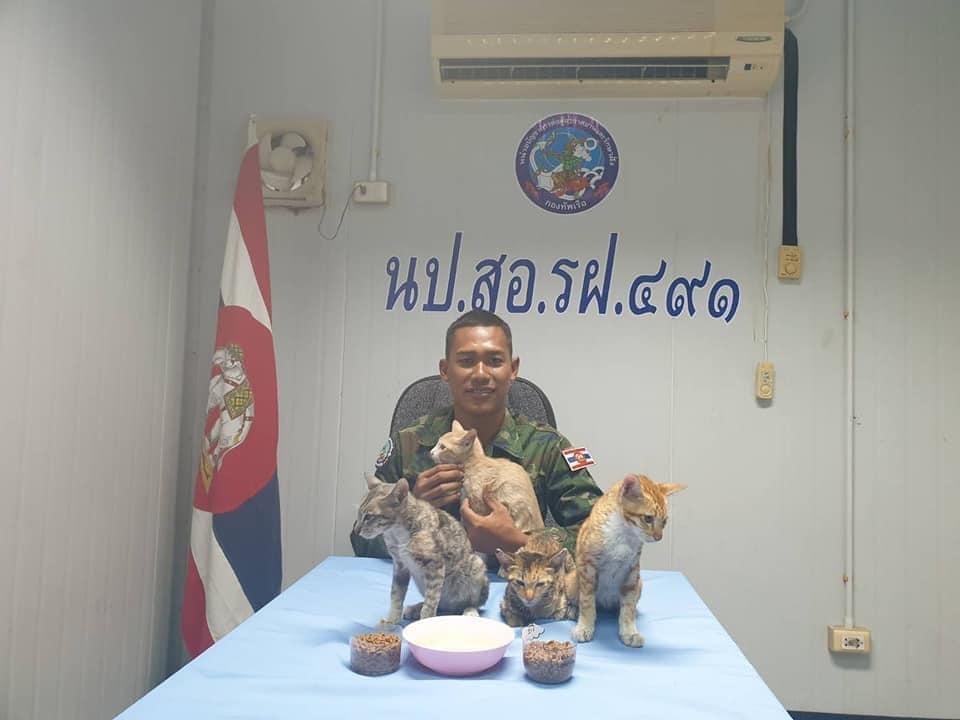 Gatos rescatados por oficiales de la Marina