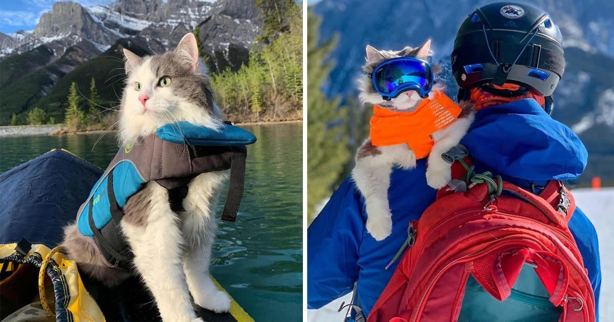 Gato encanta remar esquiar hombros papa
