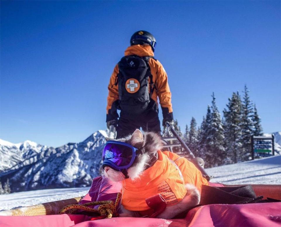 Gato listo para esquiar