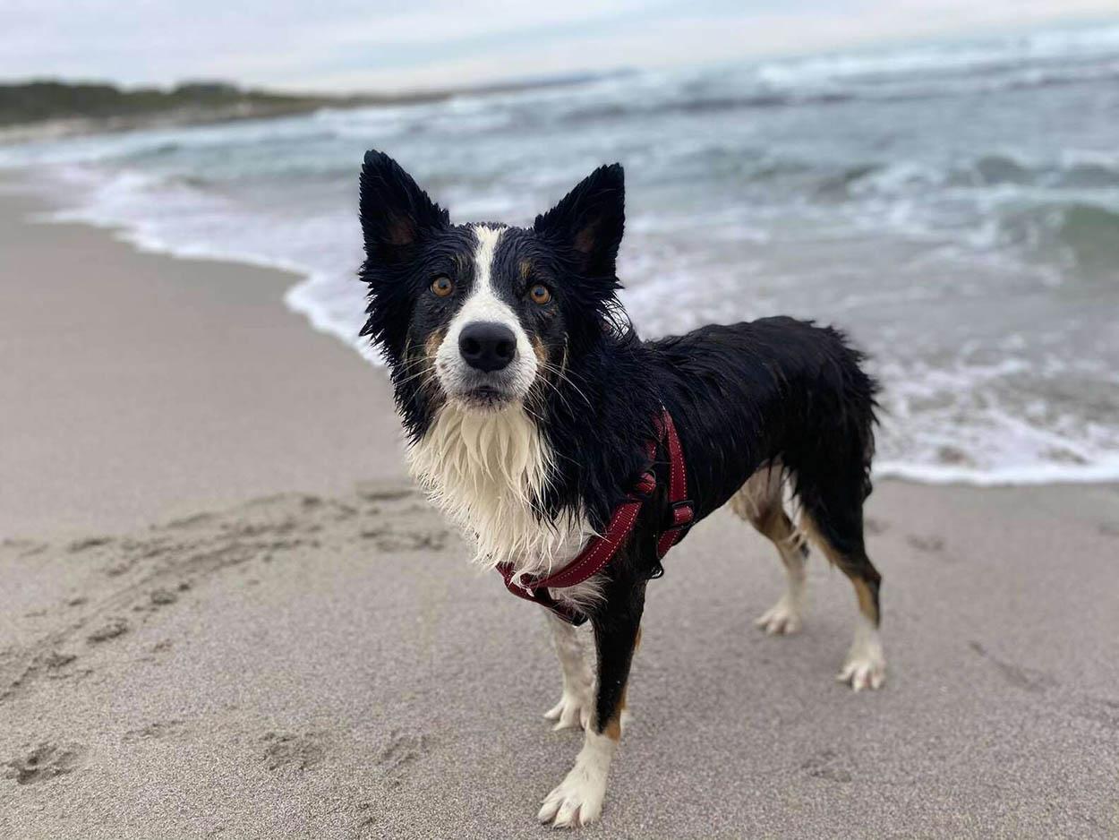 Hermoso perrito en la playa