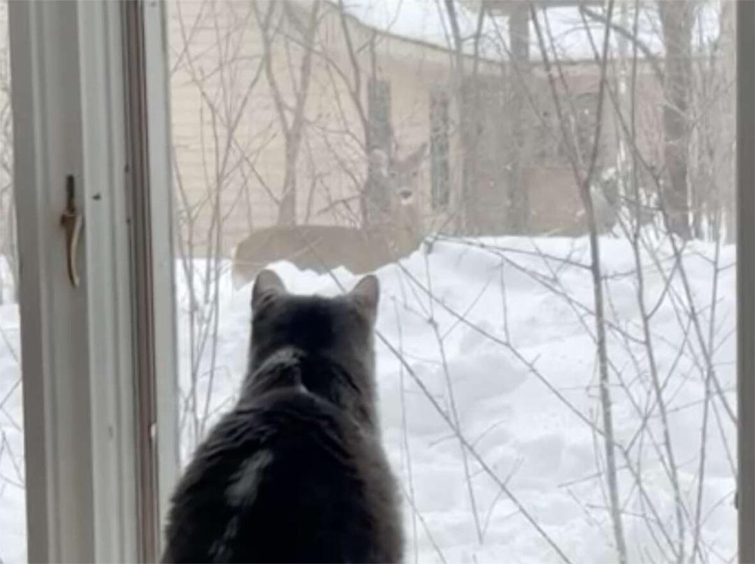 Lulu mira ciervo