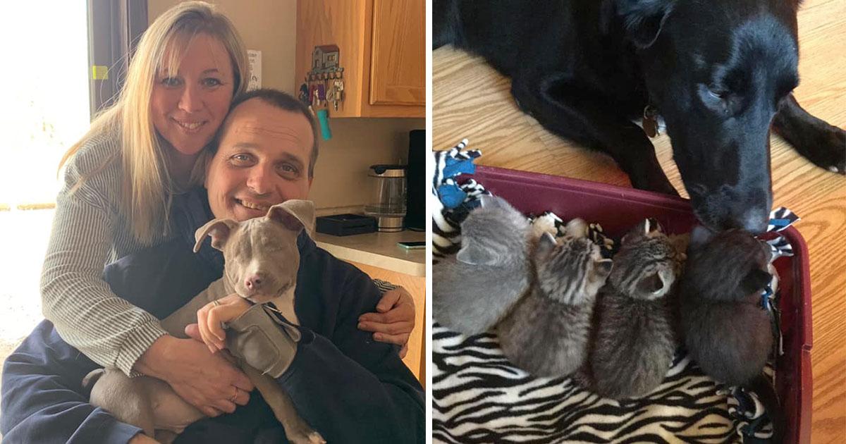 Madre adopta 26 mascotas convierte casa santuario