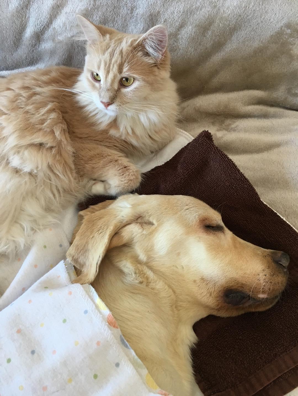 Madre adopta mascotas cama