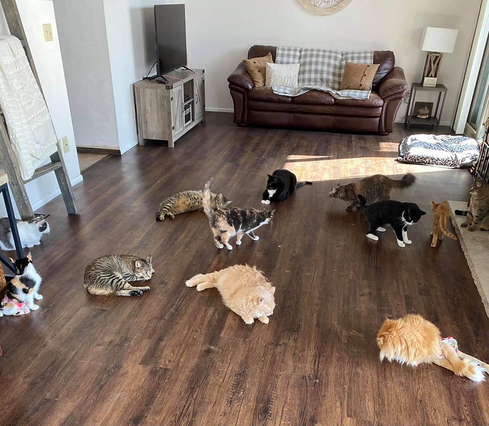 Madre adopta mascotas casa