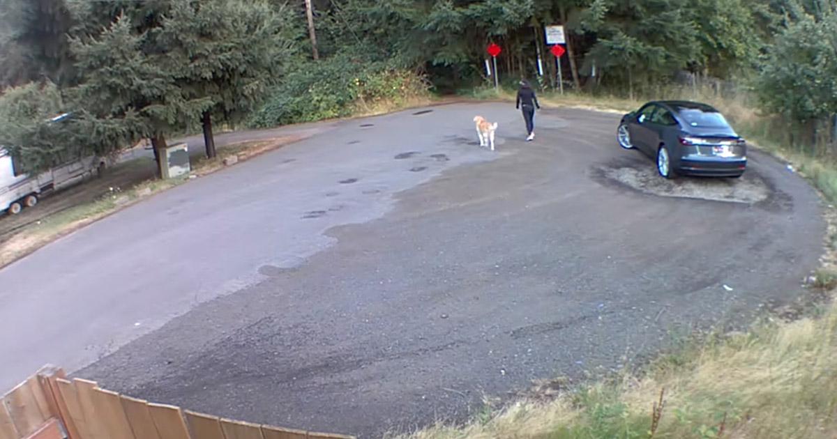 Mujer hace creer a perro que darán paseo