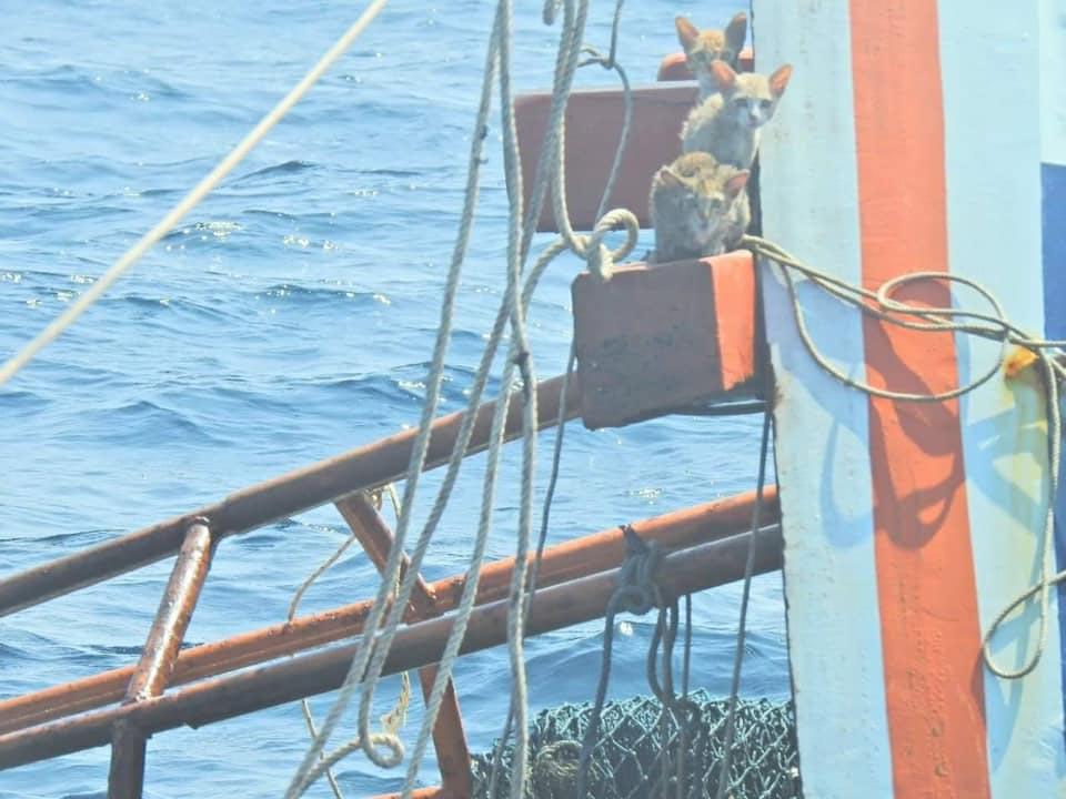Oficiales de La marina rescatan gatitos