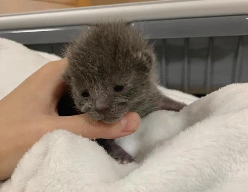 Pequeño gatito bebé