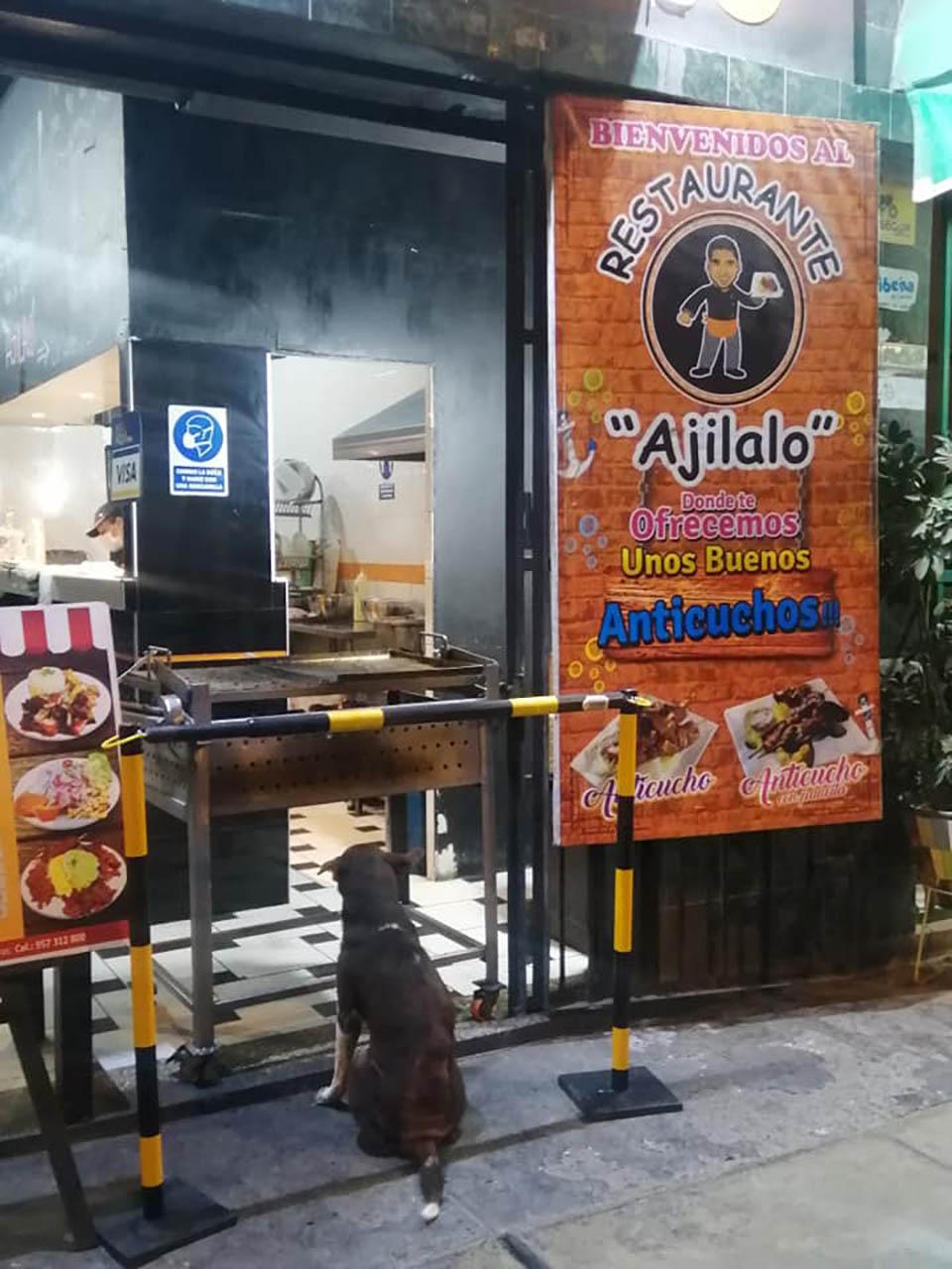 Perrito esperando comida