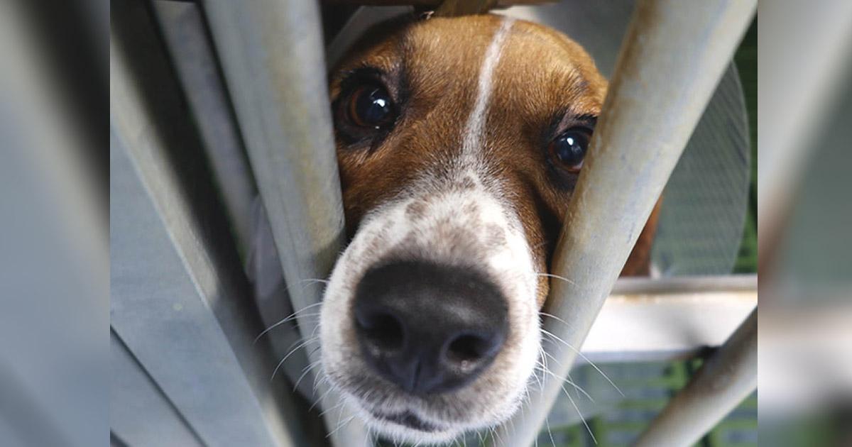 Activistas rescatan animales de un laboratorio de Madrid