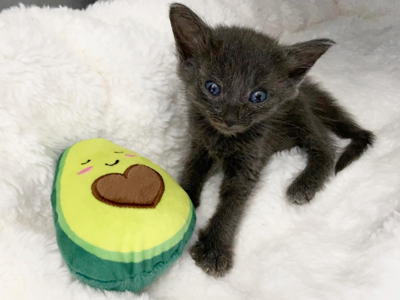 Adorable gato y su juguete