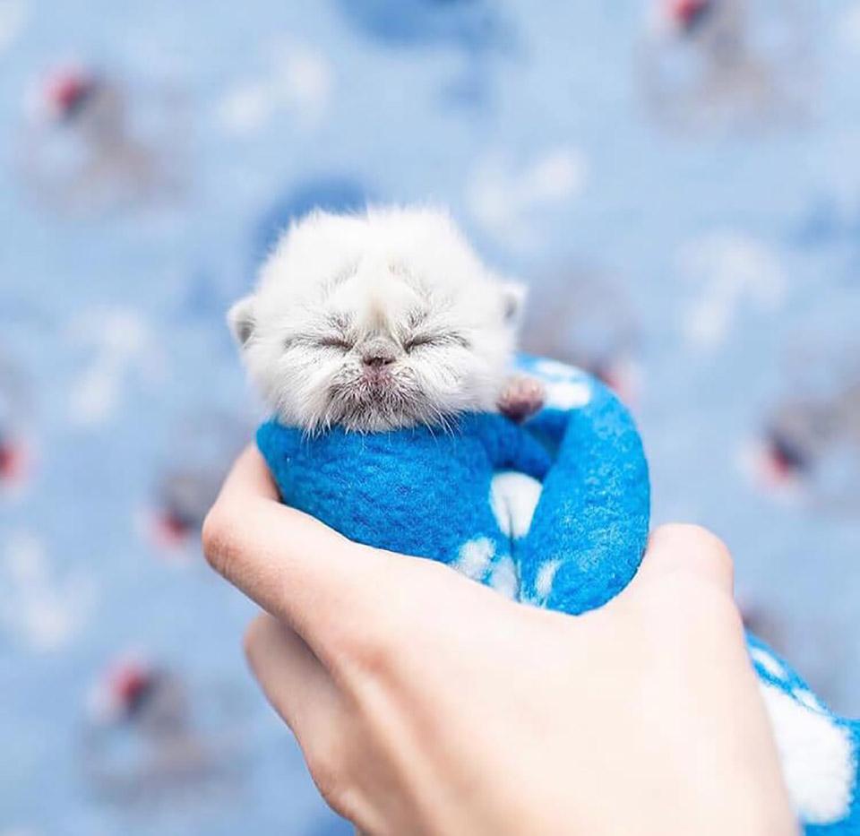 Adorable gatito bebé