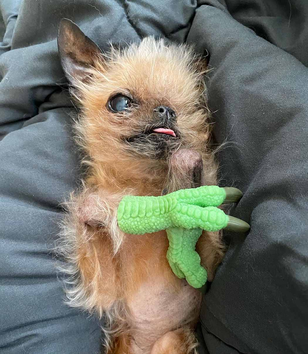 Adorable perrito rescatado