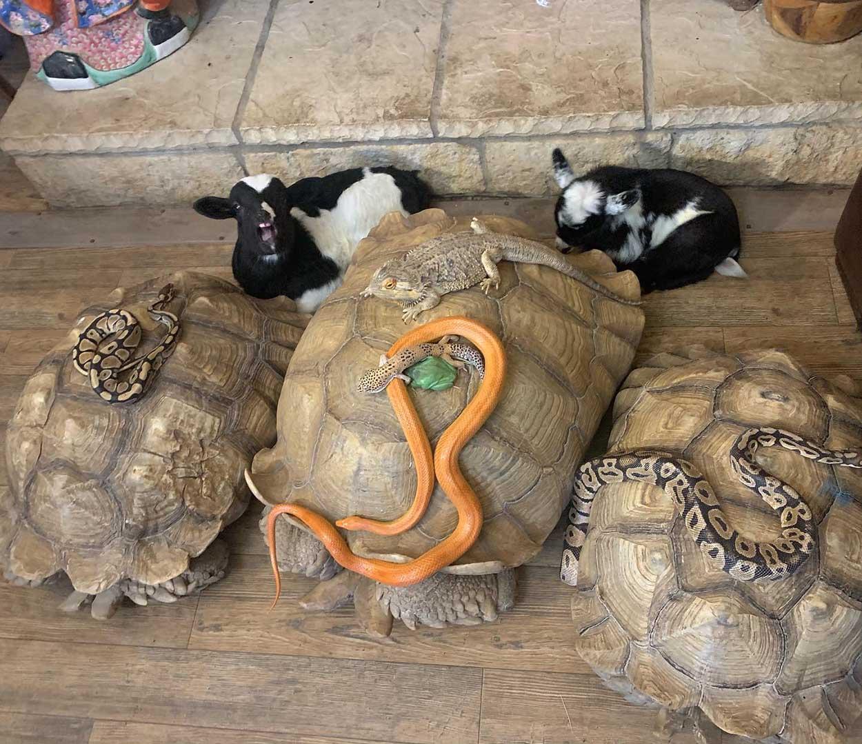 Animales de santuario refugiándose de una tormenta