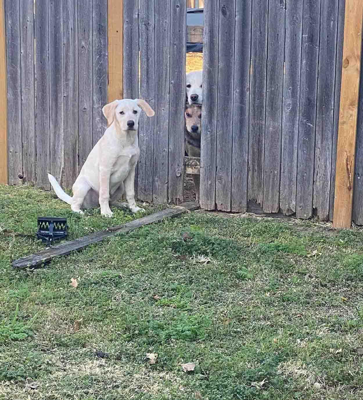 Cachorro es atrapado orquestando una fuga